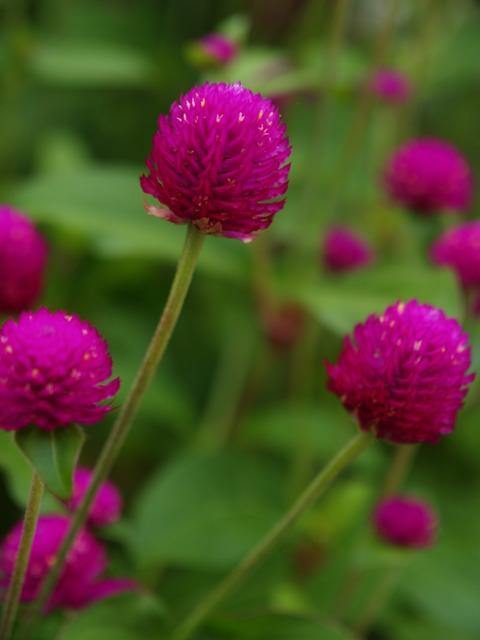 実家近辺の花など。_a0025576_2344156.jpg