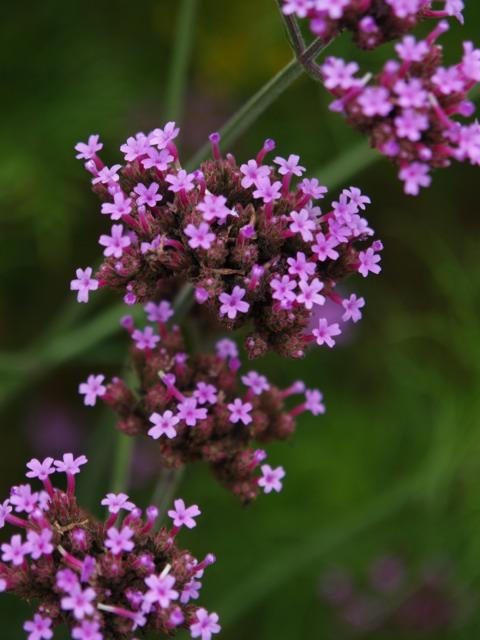 実家近辺の花など。_a0025576_235246.jpg