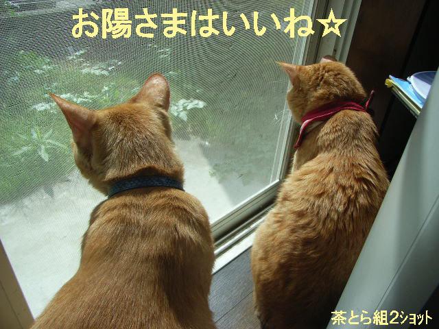 d0081025_2011457.jpg