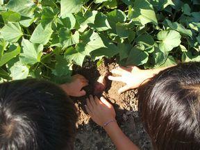 収穫~_f0096955_1719261.jpg