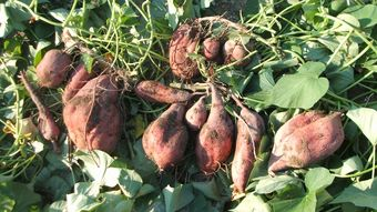 収穫~_f0096955_17422360.jpg