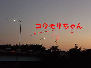 a0104564_19434372.jpg