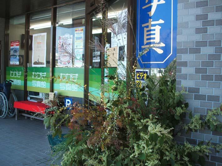 野の花摘み_c0052876_1827075.jpg