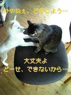 f0148927_18101671.jpg