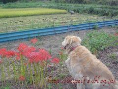 10月の連休~♪_c0134734_23104247.jpg