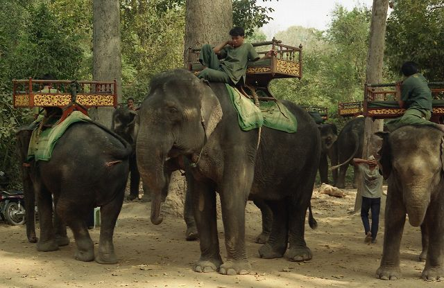 象がお出迎え  カンボジア1_b0112443_20461883.jpg