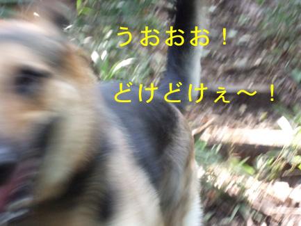 e0060693_20143057.jpg