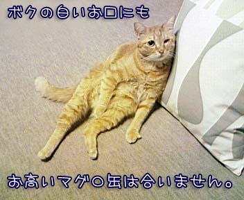 c0096342_17103342.jpg