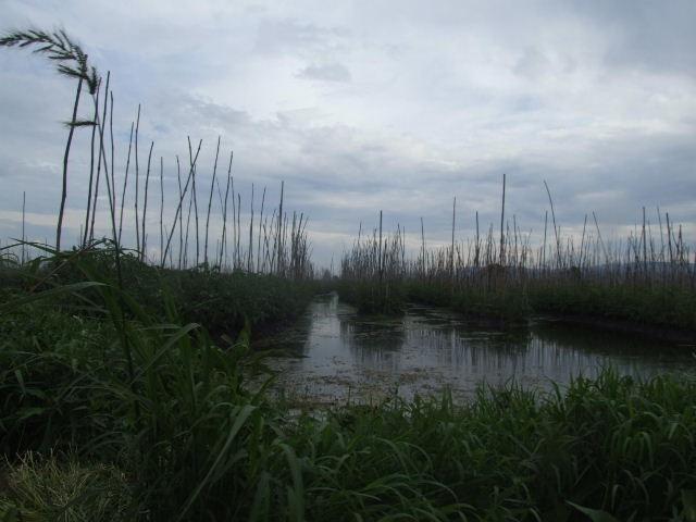 <インレー湖> インダー族の片足漕ぎと水上農園_c0011649_1055933.jpg