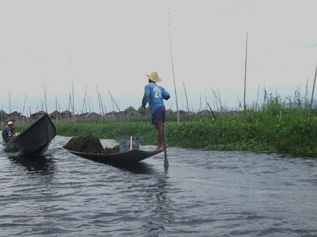 <インレー湖> インダー族の片足漕ぎと水上農園_c0011649_9493029.jpg