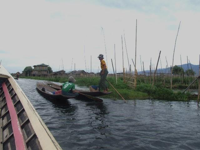 <インレー湖> インダー族の片足漕ぎと水上農園_c0011649_9523148.jpg