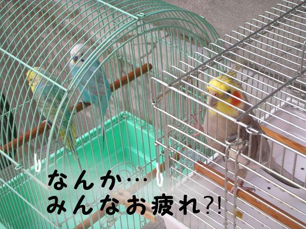 f0132055_1505522.jpg
