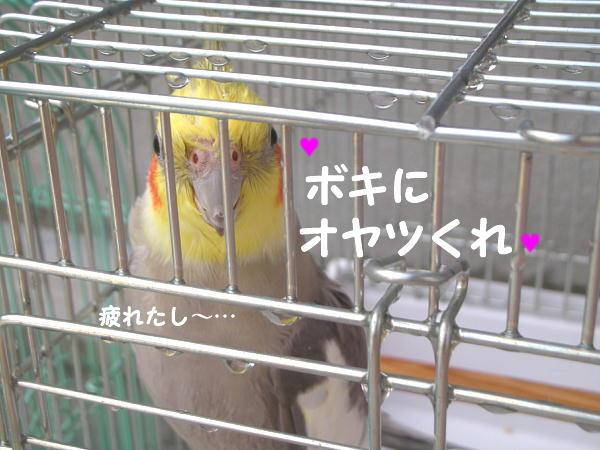 f0132055_154796.jpg