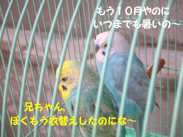 f0132055_1561932.jpg