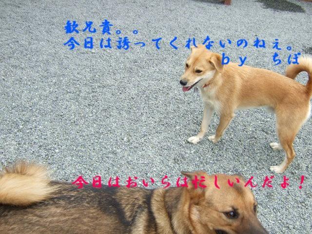 b0087400_0405114.jpg