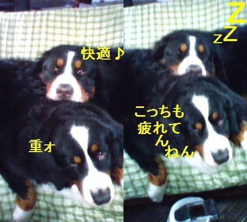 b0090201_15374458.jpg