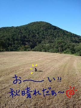 f0141130_1533616.jpg