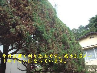 f0031037_1812278.jpg