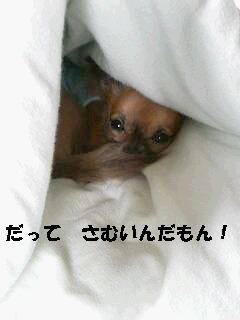 e0070777_2462310.jpg