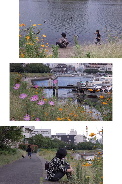 二坪の庭(2):秋_c0081286_7385816.jpg