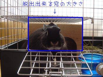 b0081503_19503558.jpg