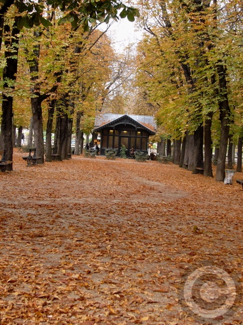 ■秋のリュクサンブルグ公園(パリ)_a0008105_19214254.jpg