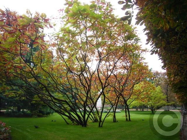 ■秋のリュクサンブルグ公園(パリ)_a0008105_1922369.jpg