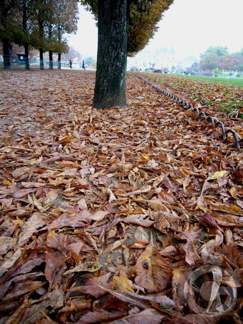 ■秋のリュクサンブルグ公園(パリ)_a0008105_19232297.jpg