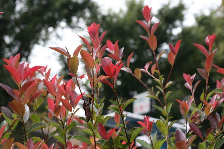 秋ですねぇ_f0141609_22283834.jpg