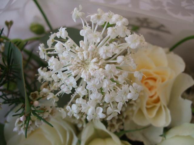 オークリーフ(イングリッシュアイズの白い花束)_f0049672_18241192.jpg