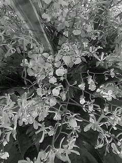 f0100480_1993167.jpg