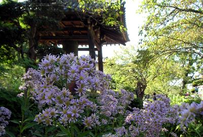 橘寺の花々_b0008289_2028236.jpg