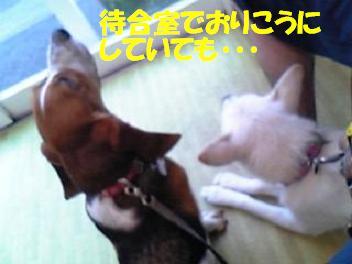 f0121712_8321159.jpg