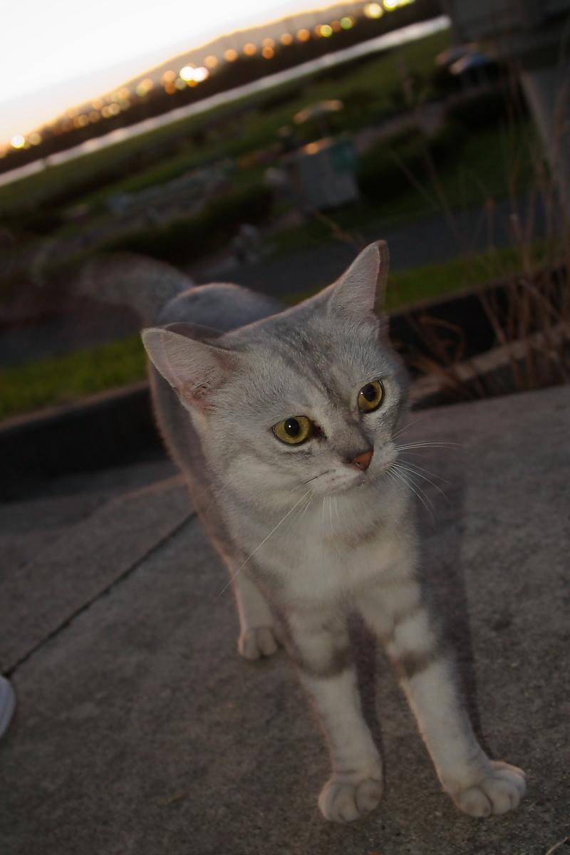 猫と・・・ Part3_f0021869_9192828.jpg