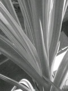f0100480_19542442.jpg