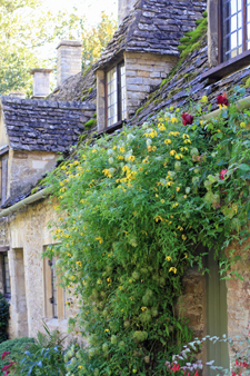The Cotswolds_f0127281_1744412.jpg