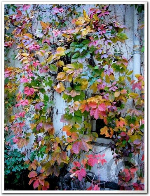 ■街角の秋・・・(パリ)_a0008105_2253168.jpg
