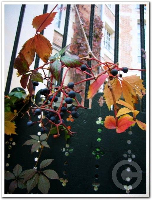 ■街角の秋・・・(パリ)_a0008105_22531931.jpg