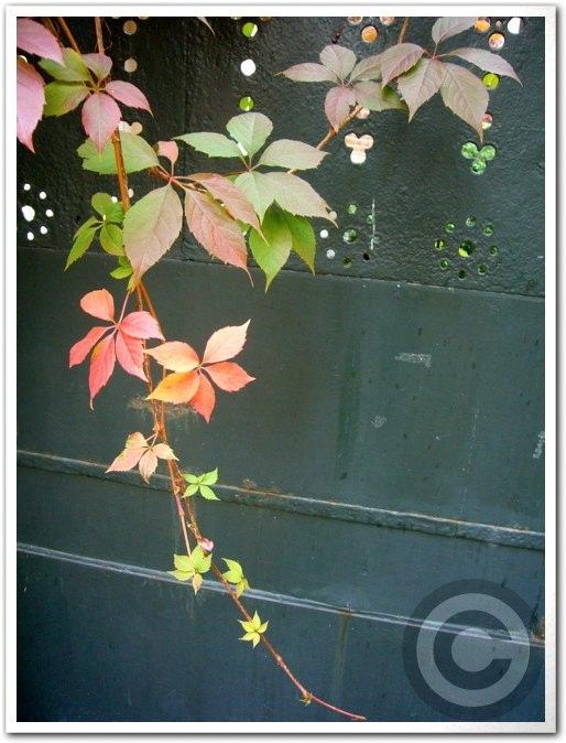 ■街角の秋・・・(パリ)_a0008105_22533672.jpg