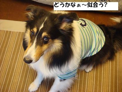 f0046854_20152630.jpg
