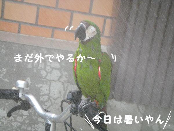 f0132055_8424872.jpg