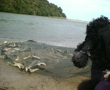 なつおさん 初めての鮭漁見学♪_f0096569_7121345.jpg