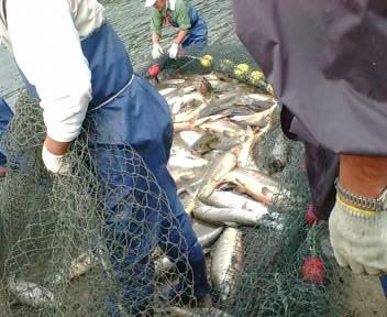 なつおさん 初めての鮭漁見学♪_f0096569_7174182.jpg