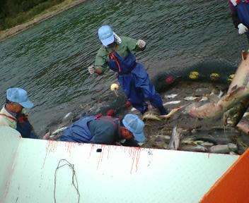なつおさん 初めての鮭漁見学♪_f0096569_7233926.jpg