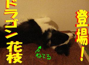 f0132070_18445146.jpg