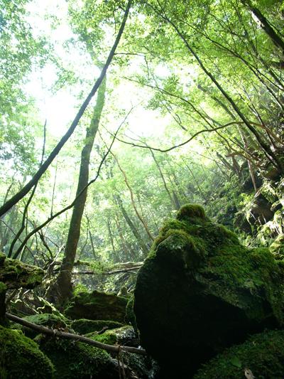 848 屋久島 白谷雲水峡を歩き終えて_c0001773_2195265.jpg