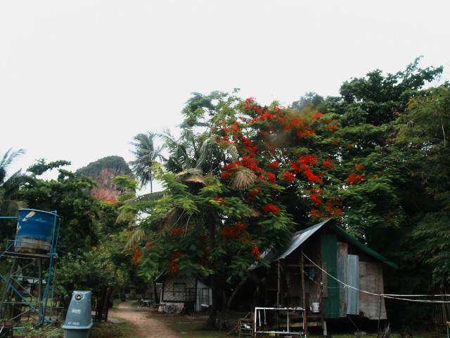 タイの風景 まずは宿探し、そして両替_f0024992_11214296.jpg