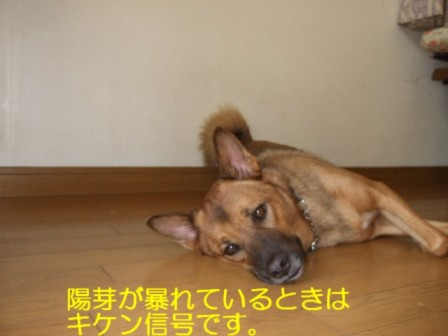 b0087400_013978.jpg