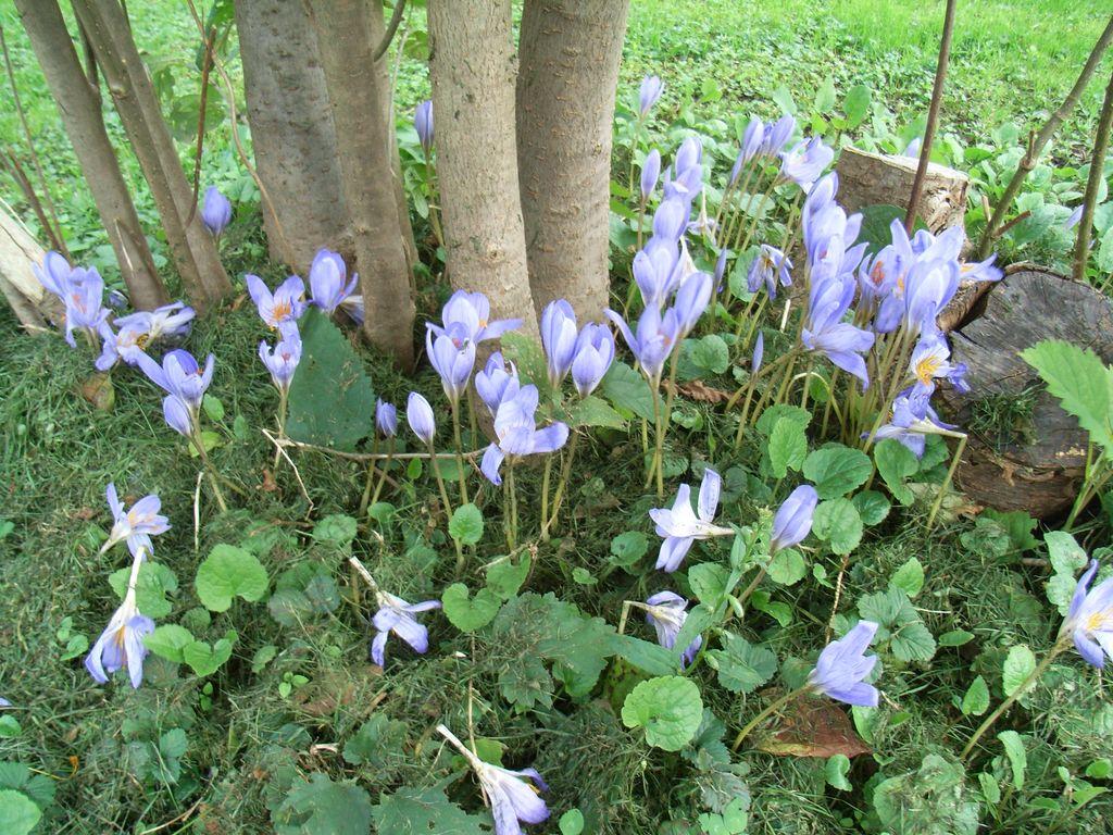 秋の北大植物園_c0025115_16593164.jpg