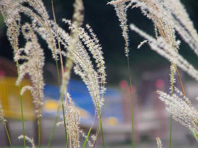 里山公園 10/13_f0100825_15182268.jpg
